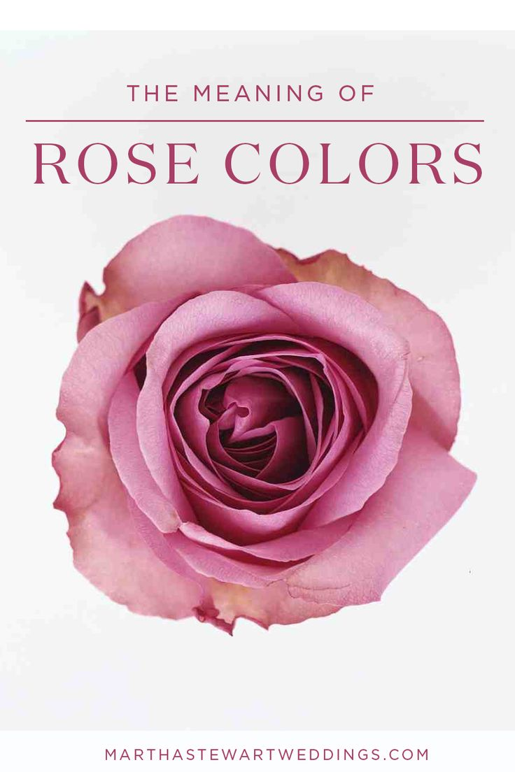 The Meaning of Rose Colors  Martha Stewart Weddings