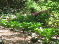 71 best ideas about Woodland Gardens on Pinterest ...