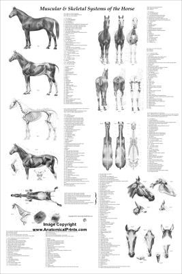 Anatomy and Charts on Pinterest