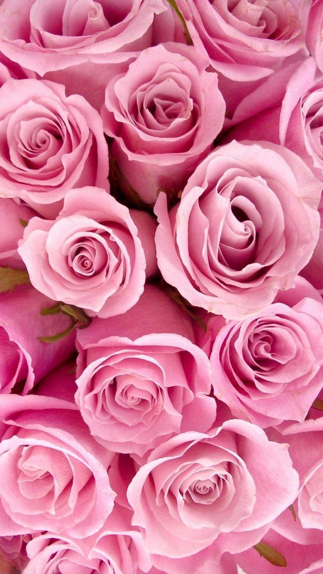 Girly Iphone Wallpaper Rose