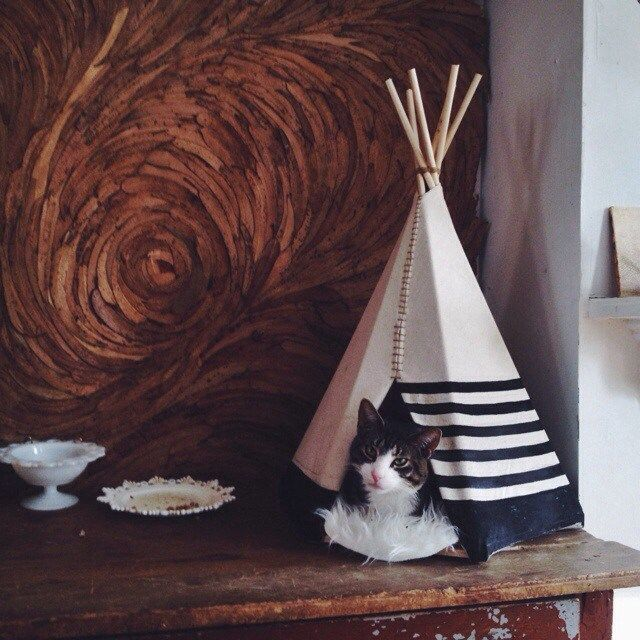 Ariele Alasko Teepee For Cat And A Leaf Wall Behind