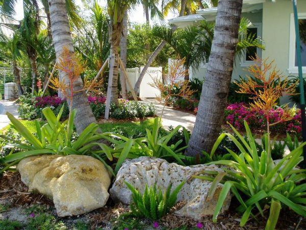 florida landscaping bromeliads
