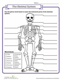 21 best images about Skeletal system on Pinterest | Lungs ...