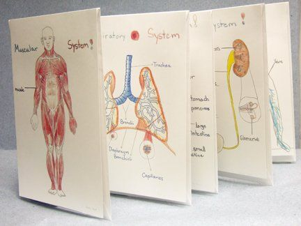Best 20 Body Systems Ideas On Pinterest Human Body