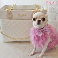 Best 25+ Chihuahua clothes ideas on Pinterest   Yorkie ...