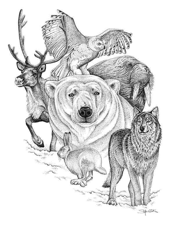225 best images about WOLVES 2- DRAWING AND PAINTING on