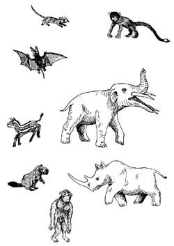 45 best images about Paleogene Period on Pinterest