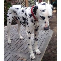 17 Best images about Dog costumes and costume ideas for ...