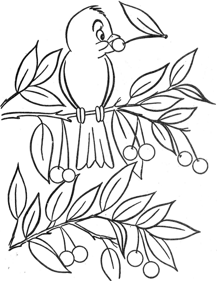 17 Best images about Coloring-Birds on Pinterest