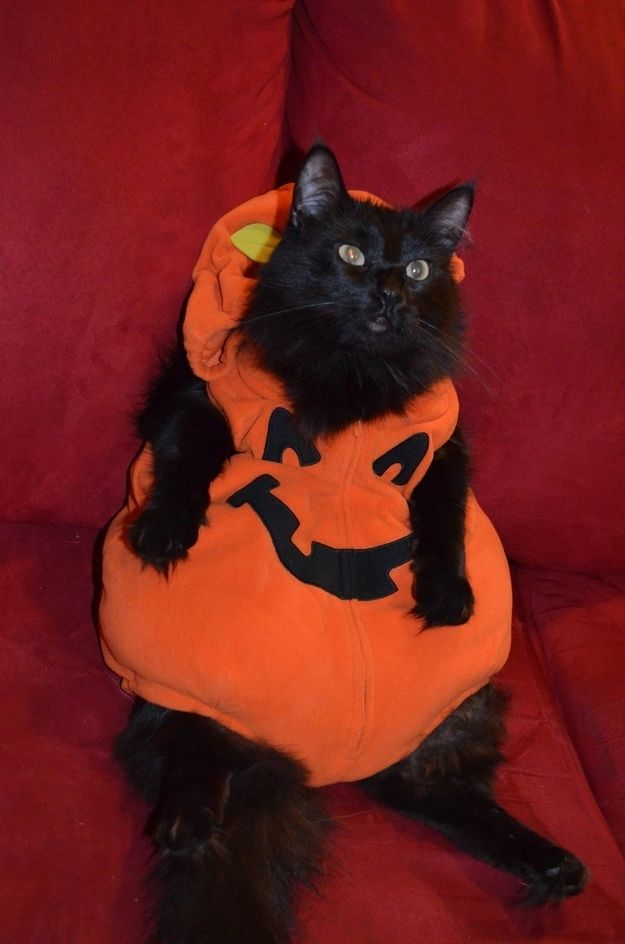 Cute Image Of Coincidence Wallpaper 17 Best Images About Beautiful Samhain Kittens Or Cats