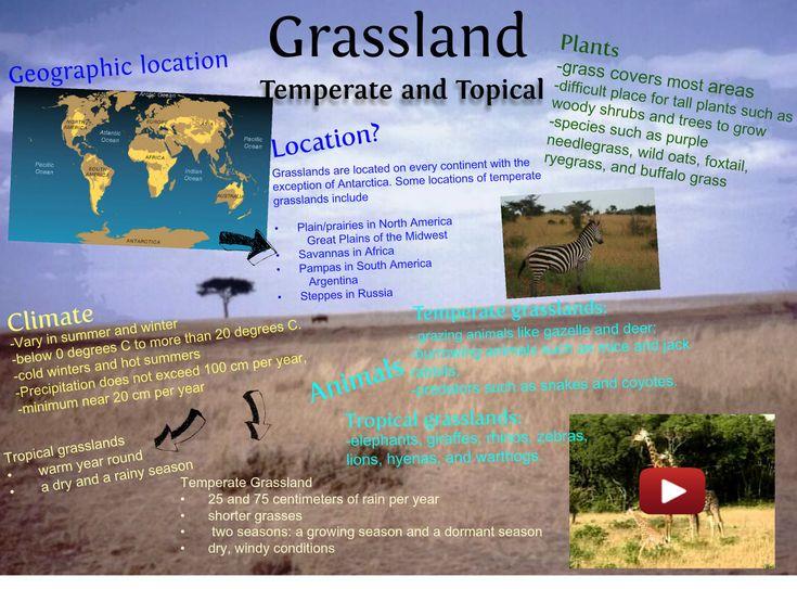 Grassland Shoebox Project Google Search Kristin's