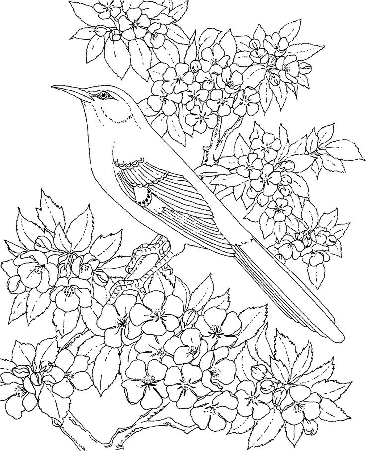 Printable Mockingbird Animals Coloring Pages