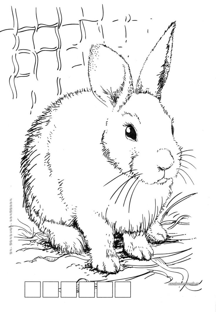 17 Best images about Adult Coloring Pages: Farm Animals on