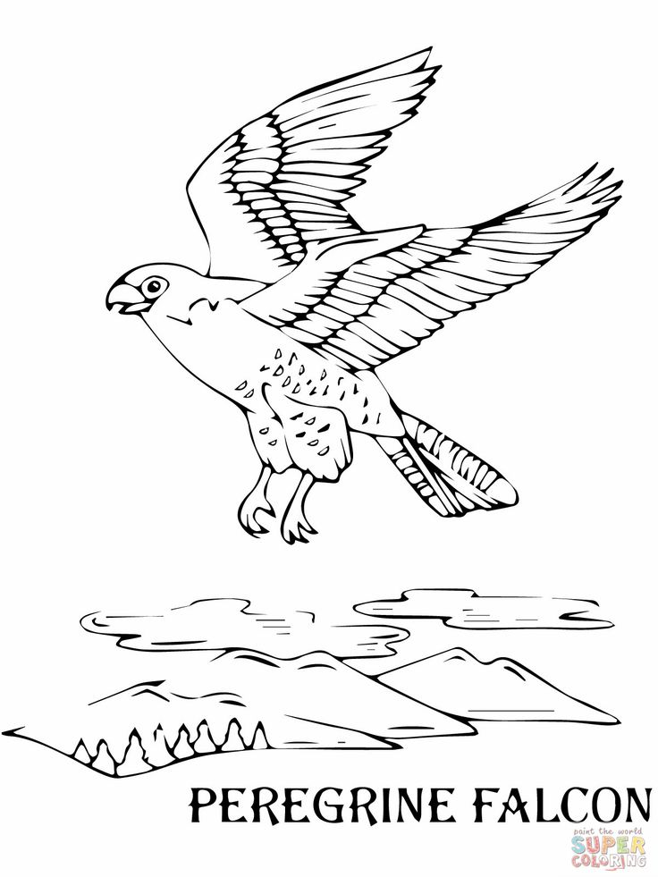 Peregrine Falcon Coloring Sheets Falcons Page