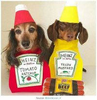 17+ images about Dog Halloween Costumes on Pinterest ...