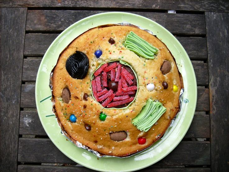 Cell Organelles Cake Animals Cells Animal Cell Model Diagram Project