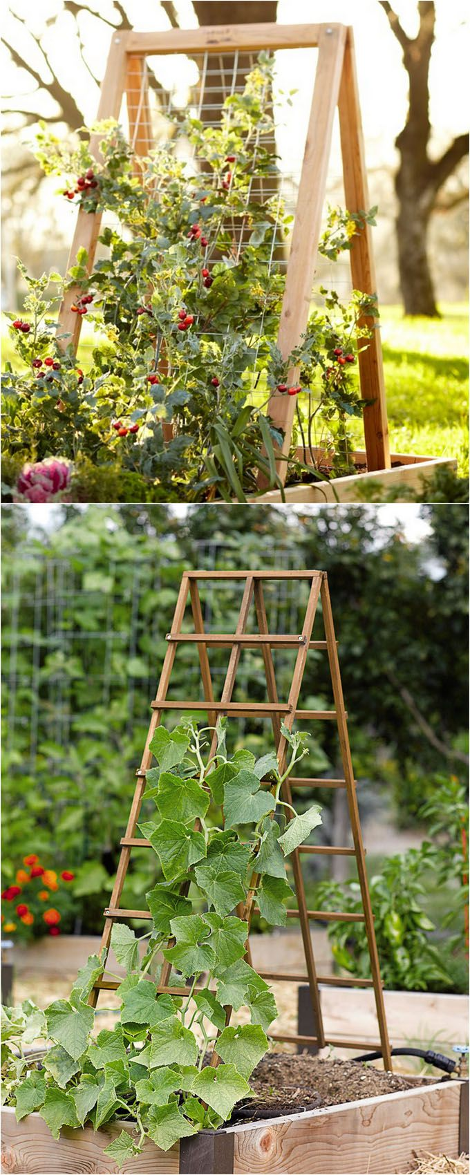 25 Best Trellis Ideas On Pinterest Trellis Flower Vines And Patio