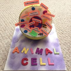 5th Grade Animal Cell Diagram John Deere 4440 Air Conditioning Wiring Model 7th - Google Search … | Pinteres…