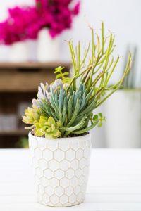 1000+ images about Succulent Arrangements on Pinterest ...