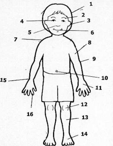49 best images about Partes del cuerpo y problemas de