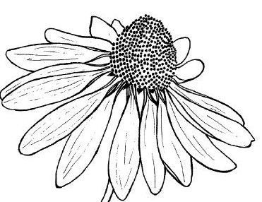 Best 25+ Flower line drawings ideas on Pinterest