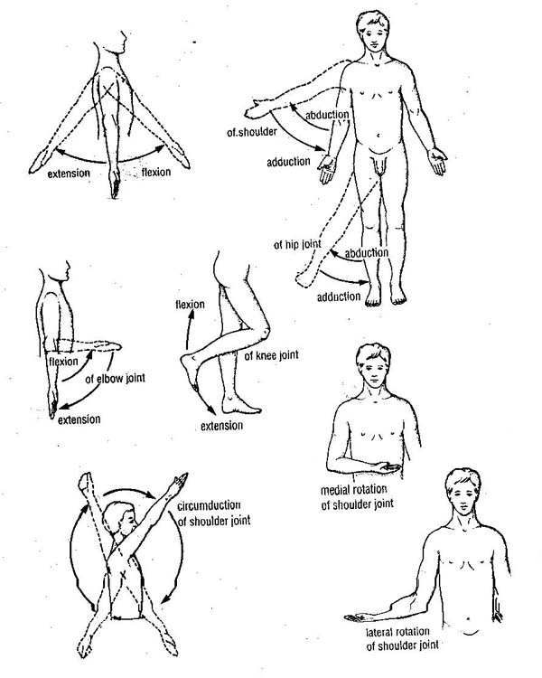 624 best images about Kinesiology for the Massage