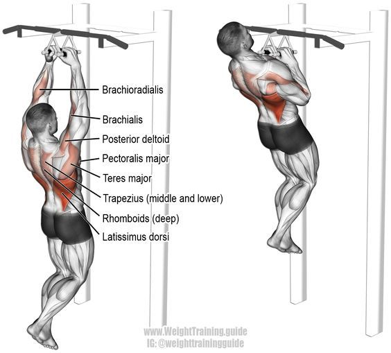 1000+ ideas about Latissimus Dorsi Exercises on Pinterest