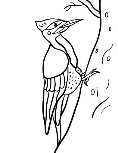 Printable woodpecker coloring page. Free PDF download at