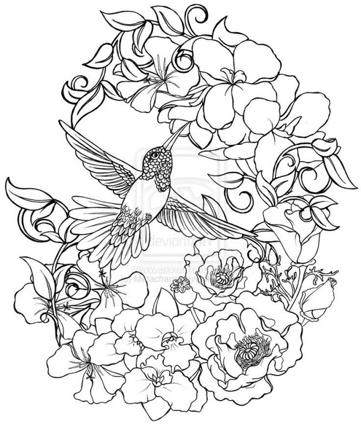 Lovely And Detailed Hummingbird And Flower Drawing To