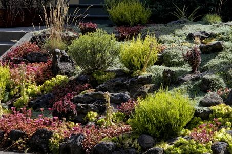 top california drought tolerant