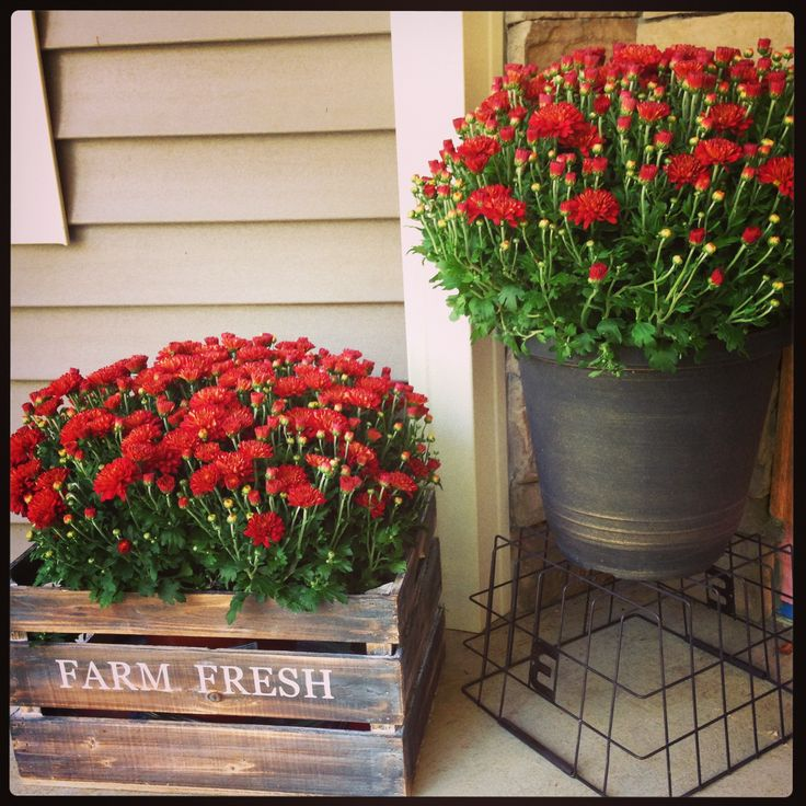 Inexpensive Decorating Ideas for Porches | 20 Fall Front Porch Decorating Ideas –Bright Mums a la Vintage