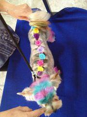 yorkie hairdo
