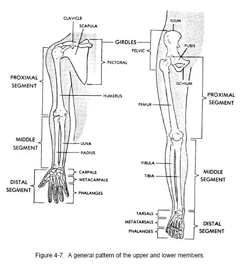 285 best images about Human Anatomy and Physiology on