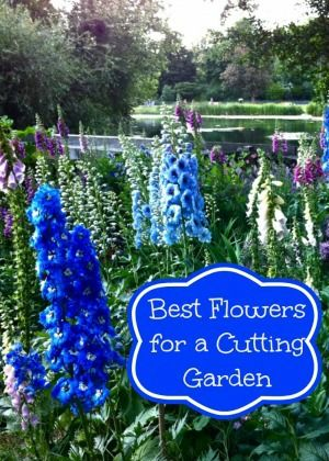 17 Best Ideas About Flowers For Cutting Garden On Pinterest Cut