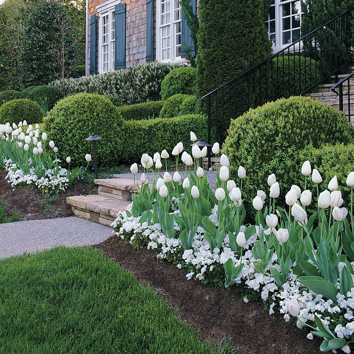 25 Best Ideas About Tulips Garden On Pinterest Spring Flowers