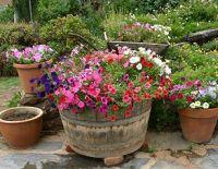 outside flower pot arrangements | Outdoor Flowers ...