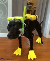 1000+ ideas about Funny Dog Costumes on Pinterest   Pet ...