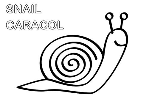 Snail coloring. Pintar caracol. Para descargar ir a: http