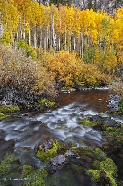 Fall Birch Tree Wallpaper 27 Best Images About Fall In Colorado On Pinterest Fall