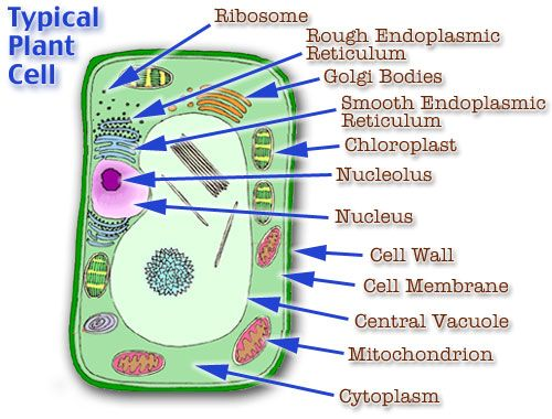 3d animal cell coloring diagram dcc wiring fresh layout plant model | ... project parts structure labeled and