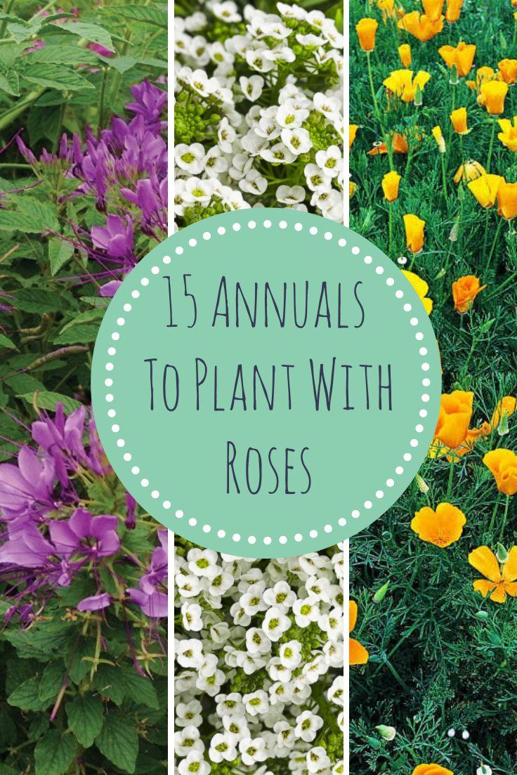 25 Best Ideas About Rose Garden Design On Pinterest Garden