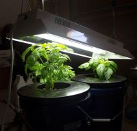 1000+ ideas about Grow Lights on Pinterest | Led Grow ...