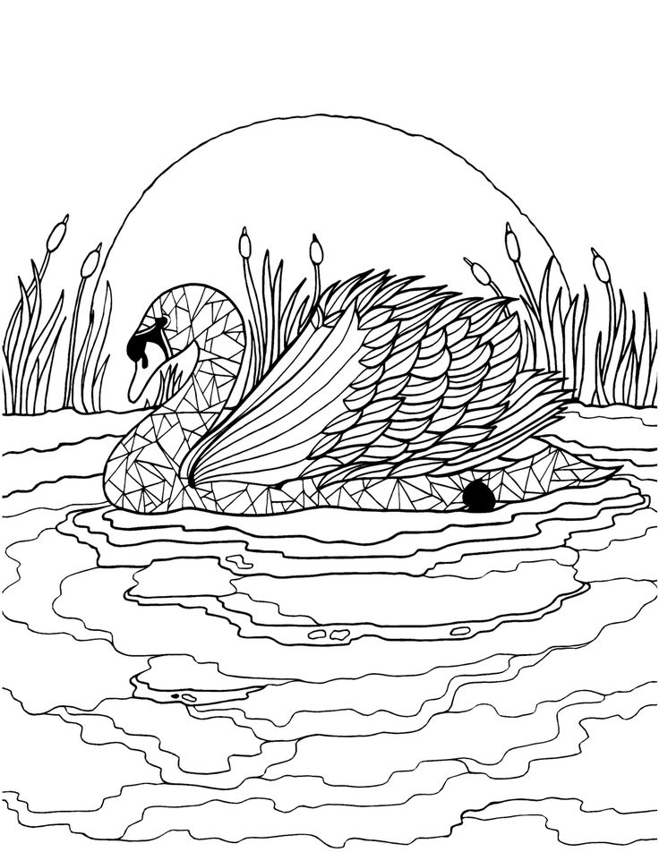 1000+ ideas about Adult Colouring In on Pinterest