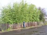 108 best images about Fence Me In on Pinterest