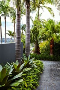 25+ best ideas about Tropical garden design on Pinterest ...