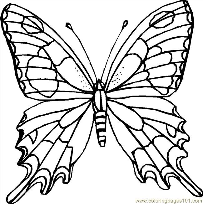 75 best images about butterfly coloring pages on Pinterest