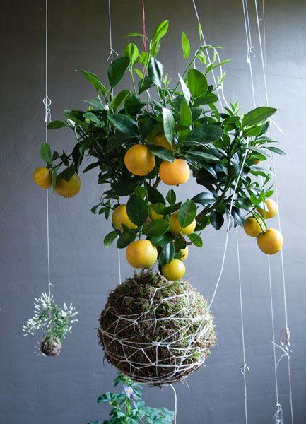 25 Best Ideas About Hanging Gardens On Pinterest Horta Vertical