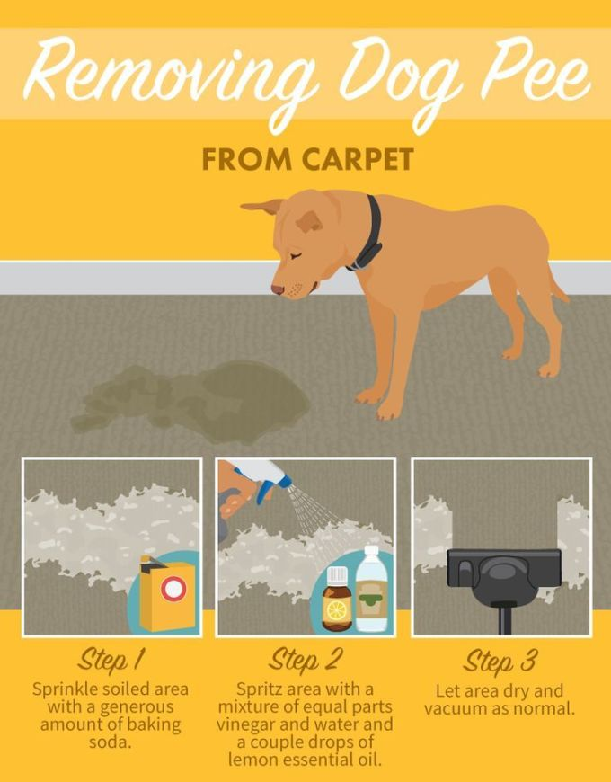 How To Get Old Dog Urine Stain Out Of Carpet Functionalities Net