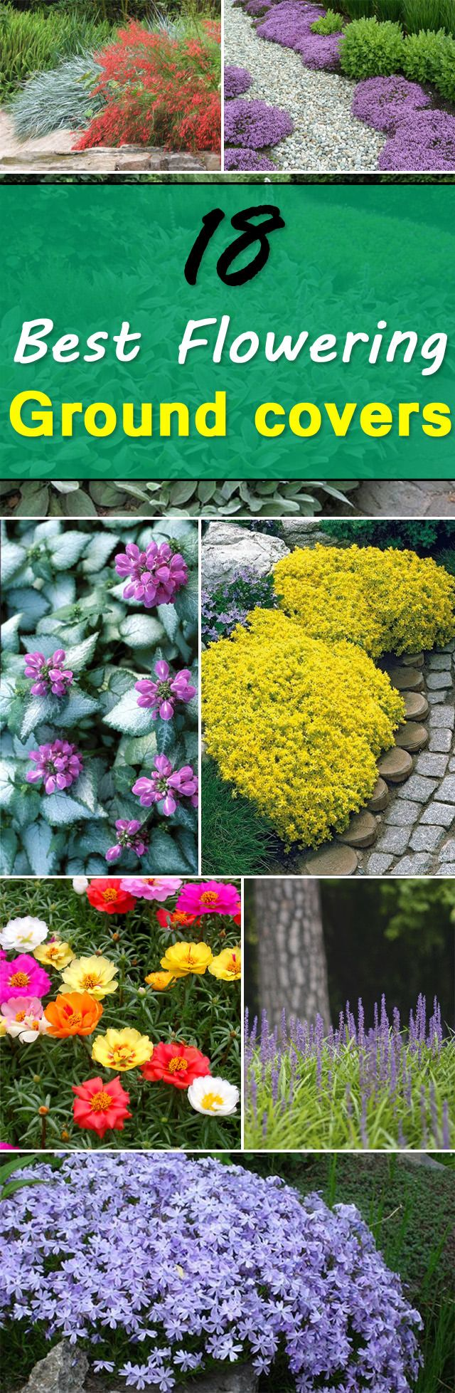 25 Best Ideas About Ground Cover Plants On Pinterest Ground