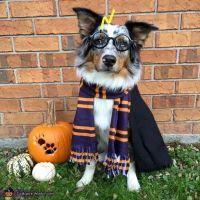 1000+ ideas about Dog Halloween on Pinterest | Dog ...